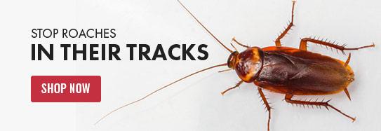 DIY Pest Control | Solutions Pest & Lawn