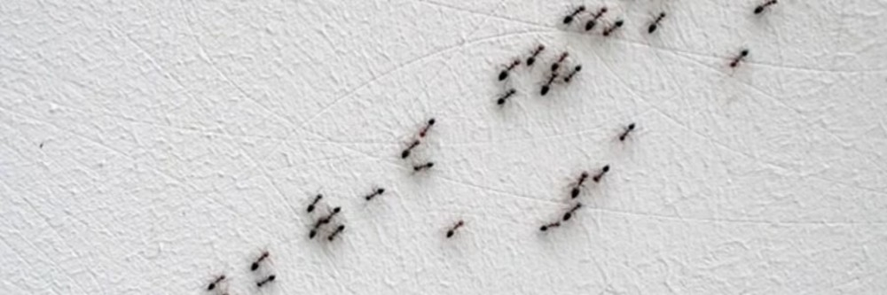 How To Get Rid Of Ant Hills Quickly And Easily Diy Ant Hill Treatment Guide Solutions Pest Lawn