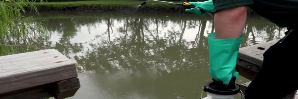 How To Control American Water Willow   Solutions Pest & Lawn