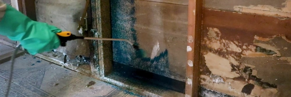 How To Get Rid of Mold After A Flood | Solutions Pest & Lawn