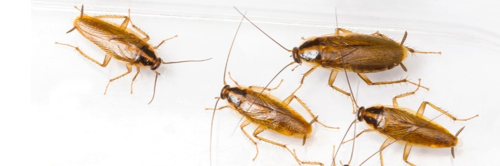 How to Get Rid of Roaches in an Apartment | Solutions Pest ...