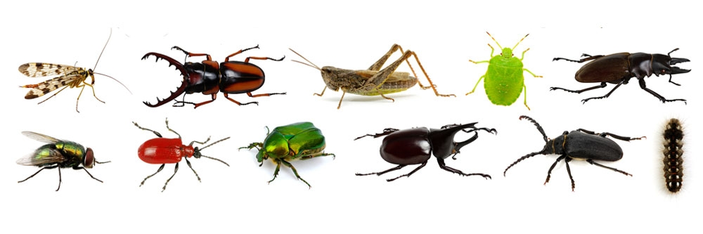 More Pests | Solutions Pest & Lawn | Solutions Pest & Lawn