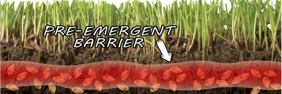 Dimension Herbicide Solutions Pest Lawn