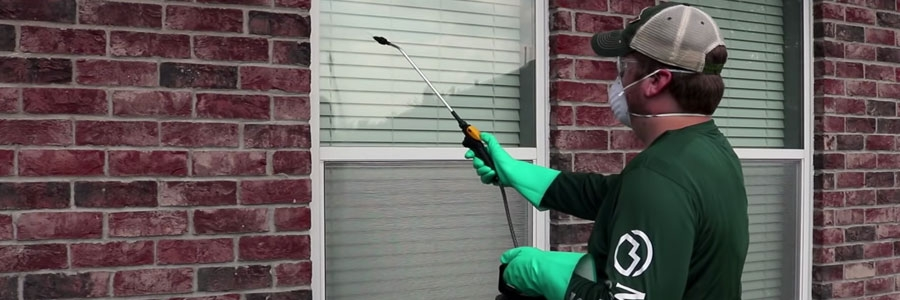 How To Get Rid of Flies | DIY Fly Control Products