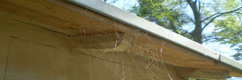 How to Get Rid Of Spider Eggs | Solutions Pest & Lawn